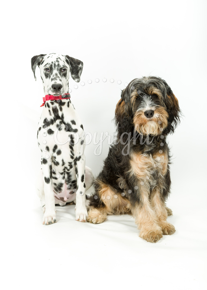 093 170402-Dennis & Dudley
